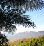 Australia mountains through fern Royalty Free Stock Photos