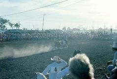 1976. Australia. N.T. Darwin. Rodeo. The Photo shows two `Stockmen` Australian cowboys galopping on their horses on each side of a fast running cow. One of the Royalty Free Stock Photo