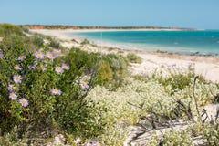 Australia northen territory landscape francois peron park Royalty Free Stock Images