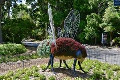 Australia, NSW, Sydney, jardín botánico Imagen de archivo libre de regalías