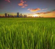 Australia occidentale - vista dorata di alba dell'orizzonte di Perth dall'interruttore Immagine Stock