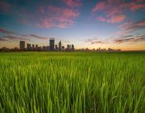 Australia occidentale - vista dorata di alba dell'orizzonte di Perth dall'interruttore immagini stock