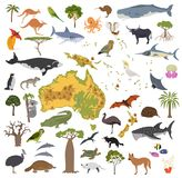 Australia and Oceania flora and fauna map, flat elements. Animal. S, birds and sea life big set. Build your geography infographics collection. Vector Royalty Free Stock Image