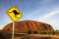 Australia Outback. In the morning ayers rock in the background and kangaroo in the front Royalty Free Stock Photography
