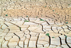Australia, outback. Dryness in outback of South Australia Stock Image