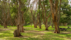 Australia park obrazy stock