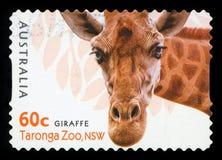 AUSTRALIA - postage stamp. AUSTRALIA - CIRCA 2012: A stamp printed in AUSTRALIA shows the Giraffe from Taronga Zoo,WA, series, circa 2012 stock photo