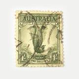 Australia postage stamp with lyrebird. On white background Stock Images