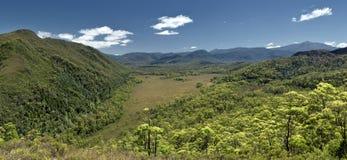 Australia rain forest Royalty Free Stock Image