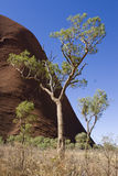 Australia Red Centre. Tree in Australian Red Centre Royalty Free Stock Photos