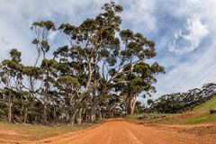 Australia red road in eucalyptus forest on sunny day Stock Image