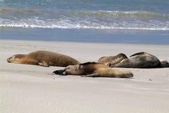 Australia, SA, Kangaroo Island, stock images