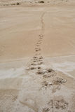 Australia sand dunes into the bush Stock Photos