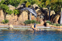 Australia Sea World Dolphin Performer Stock Photo
