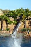 Australia Sea World Dolphin Performer Stock Photos
