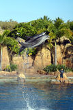Australia Sea World Dolphin Performer Stock Images