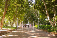 Australia Sydney Hyde Park. Walk Royalty Free Stock Photo