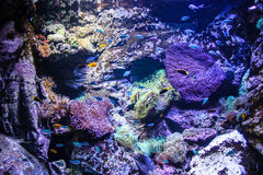 Australia Sydney museum aquatic animals Aquarium. Coral Stock Images
