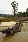 Australia Tasmania Royalty Free Stock Photo