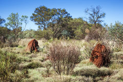 Australia termite hill Royalty Free Stock Photos