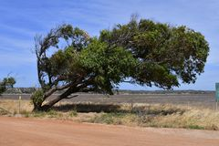 Australia,  Botany, bent tree. Australia, tree bent from wind in rural landscape Stock Photography