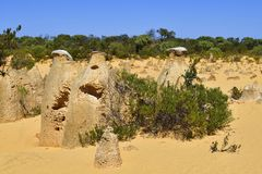 Australia, WA, The Pinnacles in Nambung National Park. Preferred tourist attraction and natural landmark royalty free stock images