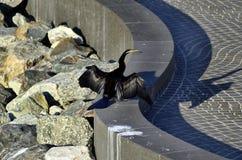 Australia, WA, Zoology, Bird Royalty Free Stock Photos