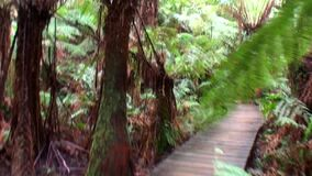 Australia, walk in the rainforest. Along the ocean road stock video footage