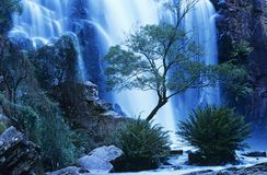 Australia waterfall in forest Stock Photography