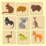 Australia wild animals card cartoon popular nature characters flat style mammal collection vector illustration. Australia wild animals card cartoon popular royalty free illustration