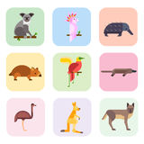 Australia wild animals cartoon popular nature characters flat style and australian mammal aussie native forest Royalty Free Stock Image