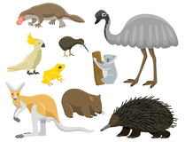 Australia wild animals cartoon popular nature characters flat style mammal collection vector illustration. Stock Image