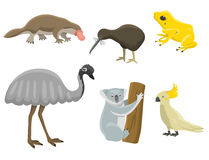 Australia wild animals cartoon popular nature characters flat style mammal collection vector illustration. Royalty Free Stock Images