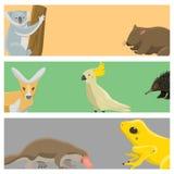 Australia wild animals cartoon popular nature characters flat style mammal collection vector illustration. Stock Images