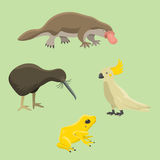 Australia wild animals cartoon popular nature characters flat style mammal collection vector illustration. Stock Photography
