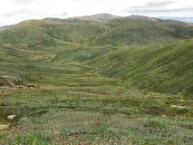 australia wysokogórskie łąki Obraz Royalty Free