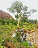 Australia& x27;s outback Stock Photo