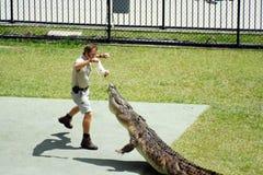 Australia Zoo Crocodile Performer Royalty Free Stock Photography