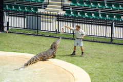 Australia Zoo Crocodile Performer Royalty Free Stock Image