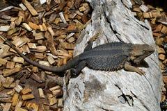Australia, zoologia zdjęcie royalty free