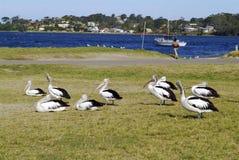 Australia zoologia obrazy royalty free