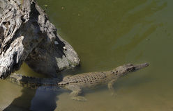 Australia, zoologia Zdjęcie Stock
