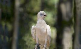 Australia, Zoology Royalty Free Stock Photo