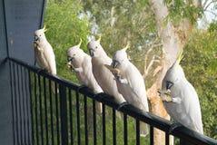 Australia, Zoology Stock Photos