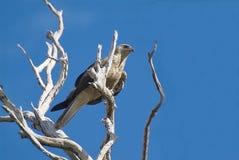 Australia Zoology Stock Photography