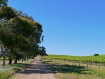 Australian agricultural fields. An insealed road along a wine Vineyard in the Clare valley in South Australian royalty free stock photography
