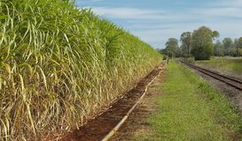 Australian agriculture industry sugar cane crop Royalty Free Stock Photos