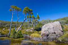 Australian Alpine Plateau Royalty Free Stock Photo