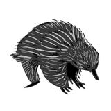 Australian animal Echidna in doodle style. Vector illustration. Vector illustration of handdrawn Australian animal Echidna in doodle style royalty free illustration
