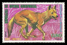 Australian Animals, Dingo. Guinea Equatorial - stamp printed 1974, Multicolor Edition of offset printing with Topic Fauna and Mammals, Wildlife, Series royalty free stock photos